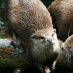 Otterpoel