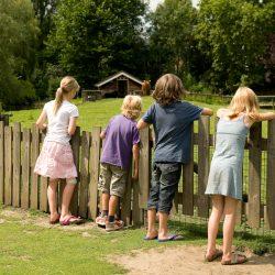 Vogelgriep in Plaswijckpark