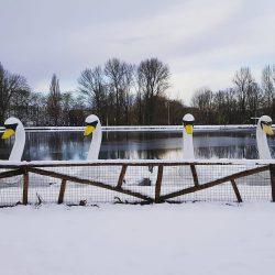 Het wintert in Plaswijckpark