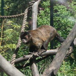 Bekijk onze nieuwe na-apen
