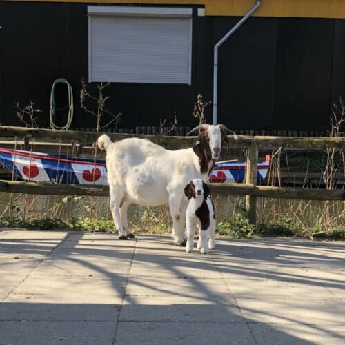 Jonge dieren in Plaswijckpark